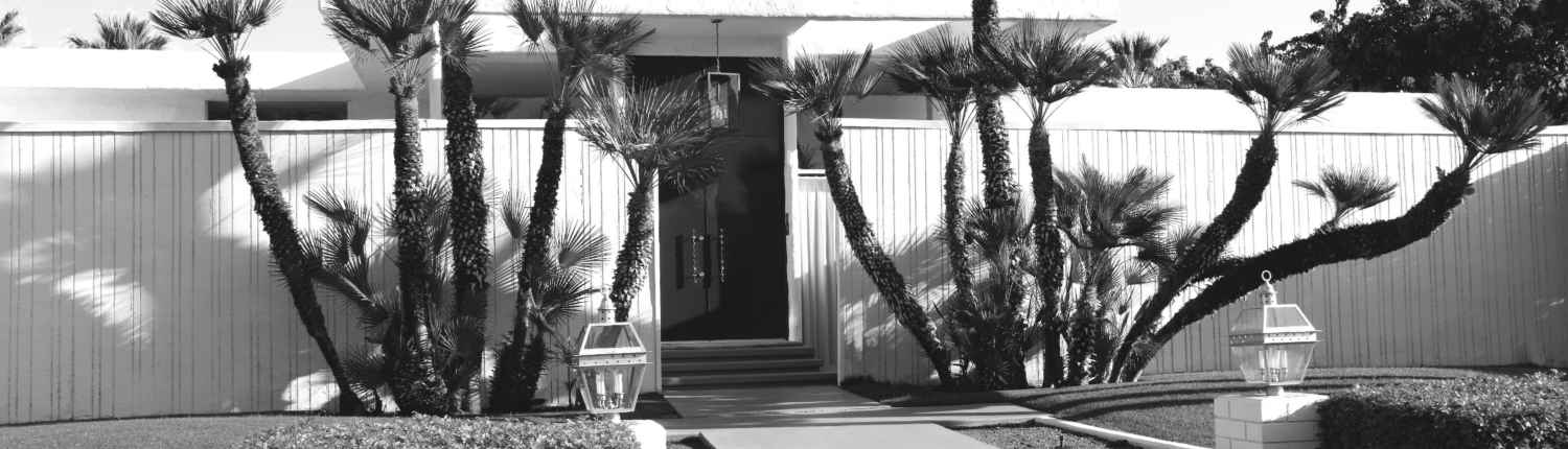 black and white shot of a mid century modern house with a crazy amount of baby palm trees